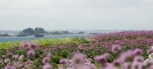paysage mer roscoff